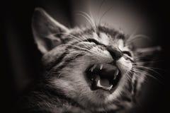 dziecka czarny kota fourious biel Zdjęcia Stock