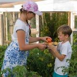 Dziecka gromadzenia się warzywa zbierają A chłopiec i dziewczyna pracuje Zdjęcie Stock