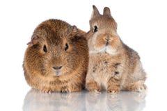 Dziecka królik doświadczalny i wpólnie Obraz Royalty Free