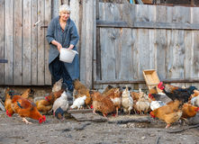 dziecka kurczaka gospodarstwa rolnego kratownica zdjęcia stock