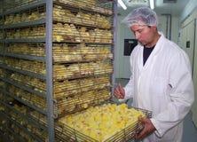 dziecka kurczaka inkubator Fotografia Royalty Free