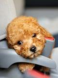 dziecka mały psi Fotografia Royalty Free