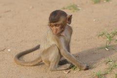 dziecka makaka małpa Zdjęcie Royalty Free