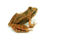 dziecka paciorkowy przyglądający się żaby biel obrazy royalty free