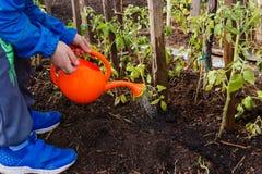 Dziecka podlewania pomidorowe rozsady od małej pomarańczowej podlewanie puszki w ogródzie fotografia royalty free