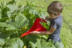 Dziecka podlewania warzywa w ogródzie Zielonej trawy tło Boczny widok Obraz Stock