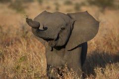2009 dziecka słonia fotografia brać Obrazy Royalty Free