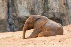 2009 dziecka słonia fotografia brać Zdjęcia Stock
