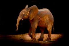 2009 dziecka słonia fotografia brać Fotografia Royalty Free