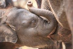 2009 dziecka słonia fotografia brać Zdjęcie Royalty Free