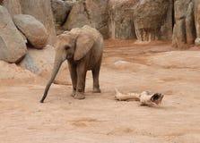 2009 dziecka słonia fotografia brać Obrazy Stock