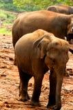 2009 dziecka słonia fotografia brać Fotografia Stock