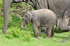 2009 dziecka słonia fotografia brać zdjęcie stock