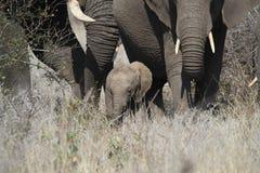 2009 dziecka słonia fotografia brać Zdjęcia Royalty Free