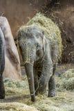 2009 dziecka słonia fotografia brać Obraz Royalty Free