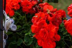 Dziecka ` s dryg przy flowerschildren ` s dryg przy kwiatami obraz stock