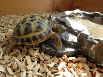 Dziecka Tortoise Zdjęcia Royalty Free