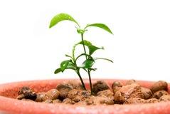 dziecka zakończenia kwiatu rośliny garnka mały up Obraz Royalty Free