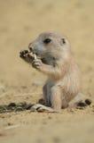 dziecka ziemi wiewiórka Zdjęcia Royalty Free
