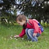 Dziecka zrywania stokrotki kwiaty Zdjęcie Royalty Free