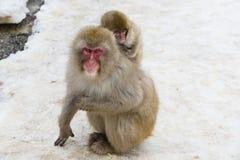 Dziecko śniegu małpy Piggyback Zdjęcia Royalty Free