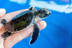 Dziecko żółw Obrazy Royalty Free