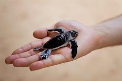 Dziecko żółw Obraz Royalty Free