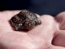 Dziecko żółw Zdjęcia Royalty Free