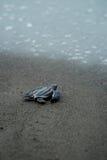 Dziecko żółw bierze pierwszych kroki nawadnia krawędź fotografia royalty free