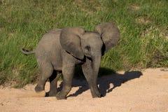 dziecko afrykański słoń Zdjęcia Royalty Free