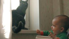 Dziecko bawić się z kotem łapać jego ogon próbami i zbiory