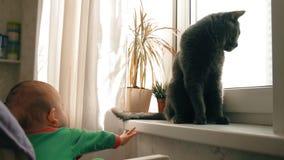 Dziecko bawić się z kotem łapać jego ogon próbami i zdjęcie wideo