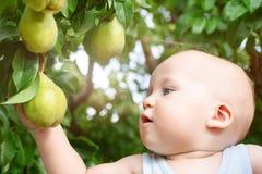 Dziecko bierze dojrzałe bonkrety przy sadem w jesieni Chłopiec chce jeść słodką owoc od drzewa w ogródzie przy spadku żniwem obraz stock