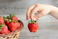 Dziecko bierze truskawki od kosza Mały dziecko trzyma truskawki w ręce Zdrowy lata jedzenie dla dzieci Obraz Royalty Free