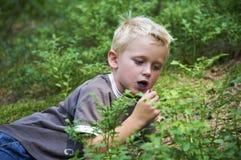 Dziecko chłopiec podnosi dzikie czarne jagody w czarna jagoda lesie Zdjęcia Royalty Free