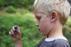Dziecko chłopiec podnosi dzikie czarne jagody w czarna jagoda lesie Obrazy Stock