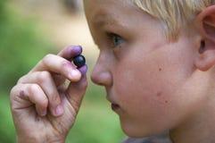 Dziecko chłopiec podnosi dzikie czarne jagody w czarna jagoda lesie Zdjęcie Royalty Free
