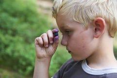 Dziecko chłopiec podnosi dzikie czarne jagody w czarna jagoda lesie Zdjęcie Stock