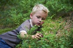 Dziecko chłopiec podnosi dzikie czarne jagody w czarna jagoda lesie Fotografia Stock