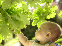 Dziecko chwytów liście przeciw wiosny zieleni tłu Obraz Royalty Free