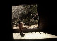 dziecko ciekawy Obrazy Stock