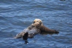 Dziecko Dennej wydry ciucia Cuddling Do Mnie jest mamą obrazy royalty free