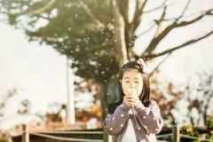 Dziecko dmucha dandelion w parku zdjęcie stock