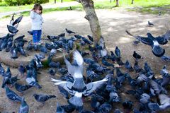 Dziecko, dzieciak, dziecko, niemowlak, młodzieniec i gołębie, Zdjęcia Stock