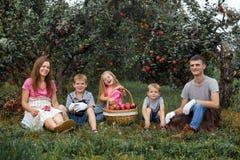 Dziecko dziewczyny chłopiec brata ojca matki rodziny siostrzanego jabłka fartucha ogrodowe duże koszykowe rękawiczki wpólnie prac zdjęcia royalty free