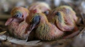 Dziecko gołębie fotografia stock