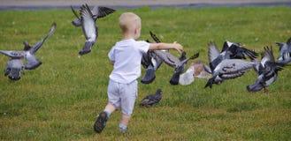 Dziecko i gołębie Fotografia Royalty Free