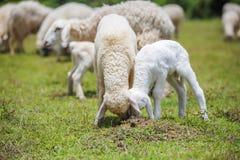 Dziecko i starzy cakle na trawie Obrazy Stock