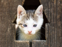 Dziecko kiciuni kota portret Fotografia Stock