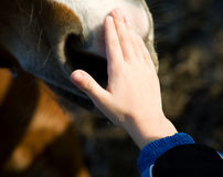 dziecko koń Obrazy Royalty Free